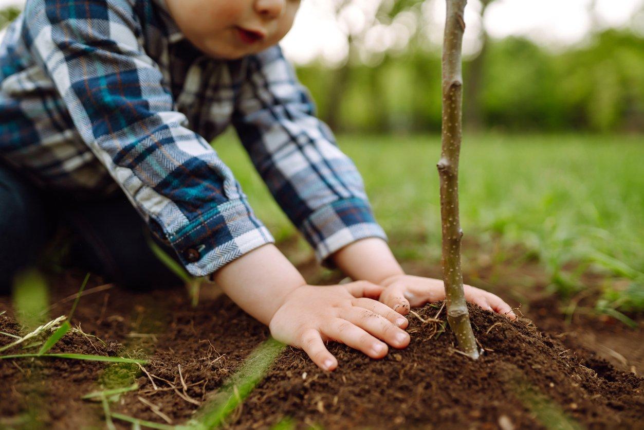 Boy planting tree