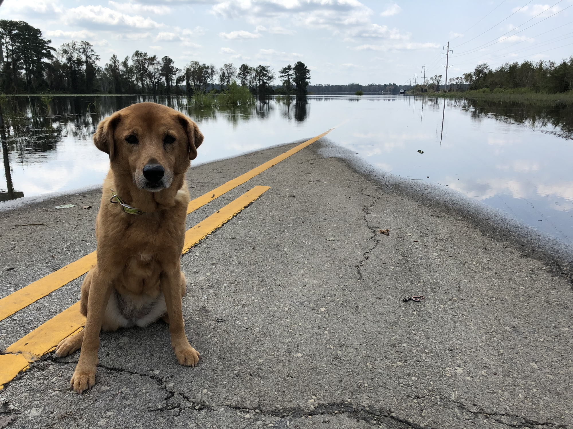 Dog on flooded road